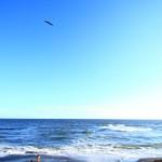 auCM桐谷健太が歌う「海の声」うまい!歌詞とCD発売は?