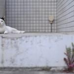 吉川晃司「下町ロケット」演技力!ハゲずに白髪がカッコイイ!